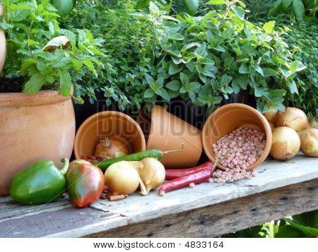 Gärtner Freude