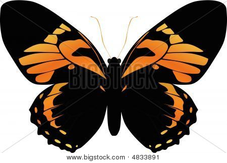 Butterfly On A White Background Yellow, Orange Color
