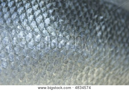 Blue Fish Scales