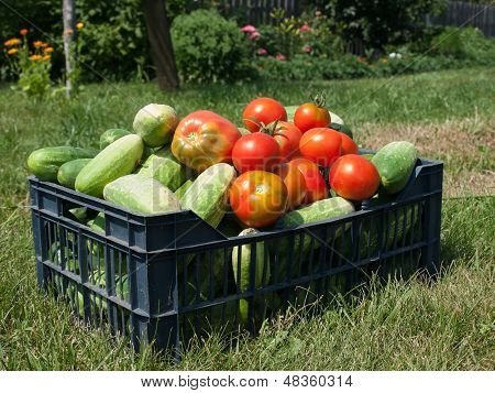 cucumbers and tomatoes in box on grass