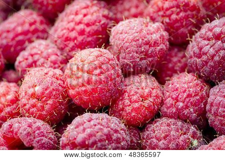 detail of delicious red raspberries