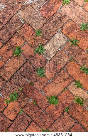 Passarela de tijolo vermelho velho em um padrão de espinha de peixe e um monte de ervas daninhas que crescem nas fendas.
