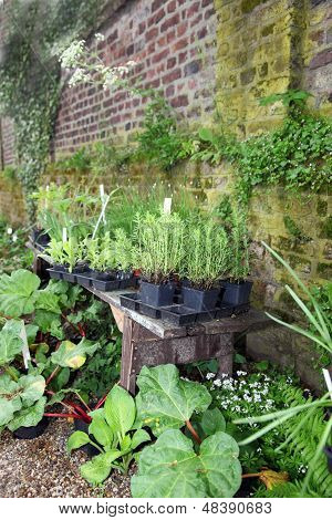 Potted Plants Alongside A Garden Wall
