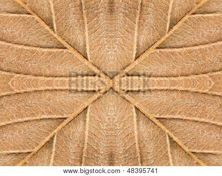 Yellow Autumn Leaf Symmetrical Texture