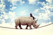 foto of rhino  - businessman ride rhino on rope - JPG