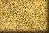 image of fenugreek  - Close up of dried fenugreek - JPG