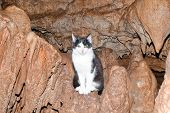 image of stalagmite  - beautiful fluffy kitten sitting in a cave on stalagmite - JPG