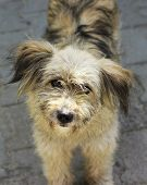 stock photo of stray dog  - Cute stray dog looking at the camera - JPG