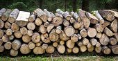 stock photo of raw materials  - Pile of wood logs ready for winter - JPG