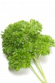 Bunch Of Fresh Parsley On White Background