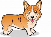stock photo of corgi  - Vector illustration of a Pembroke Welsh Corgi - JPG