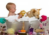 stock photo of soapy  - Cute little blond girl having fun bathing with her dog in a metal bathtub filled with soapy bubbles as she lovingly rinses the golden jack russel terrier off with a sponge - JPG