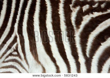 Piel de cebra