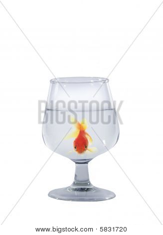 Gold Fish In Glass
