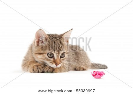 Kitten Isoalted On White