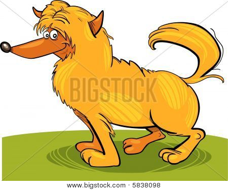 shaggy yellow dog
