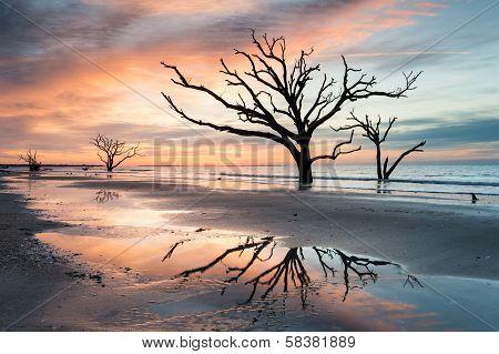 Charleston South Carolina Botany Bay Boneyard Beach Sunrise Tree Reflection
