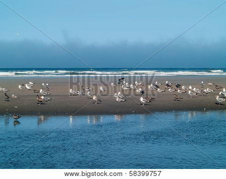 A Variety Of Seabirds At The Seashore