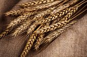 stock photo of fall-wheat  - Ears Of Wheat Over Linen Background - JPG