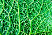 stock photo of roughage  - macro photography of green kale leaf surface - JPG