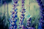 stock photo of violet flower  - Blue butterfly sitting on meadow violet  flower, retro vintage hipster image
