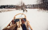stock photo of laika  - Sled dogs pulling a sled through the winter forest in Central Finland - JPG