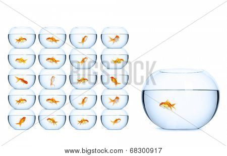 Each goldfish swimming in its own aquarium. Concept of creating favorable conditions for business.