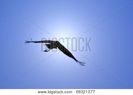 Marabou Stork - African Wild Bird Background - Beautiful Blue