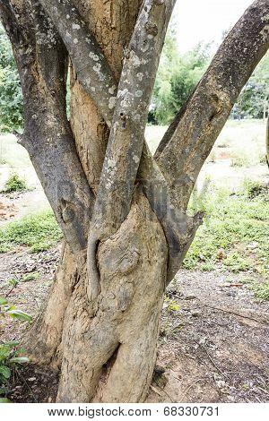 Closeup of tree having intertwined shoots