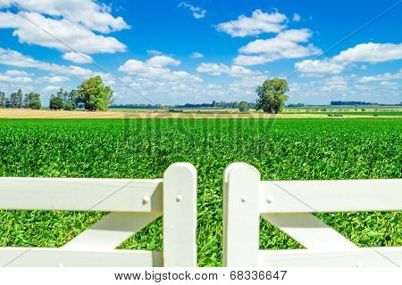 Gorgeous Field Over White Picket Fence Door.