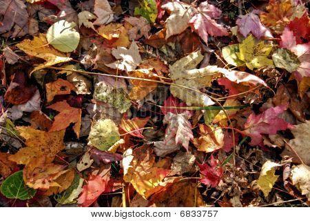 Horizontal Fall Leaves
