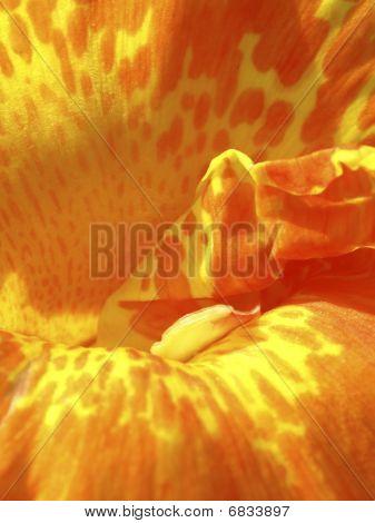 Closeup Of An Orange Flower