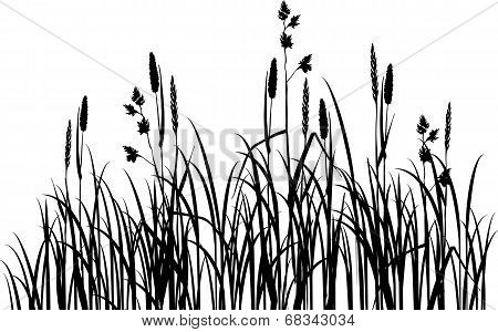 Silhouettes of grass