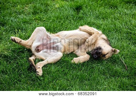 Dog Resting On Grass