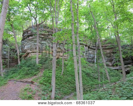 Spring Time Trees along one of the Box canyons at Starved Rock State Park