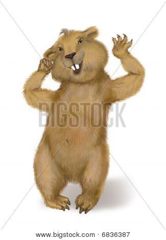 A Marmot Wakes Up. Day Of Marmot