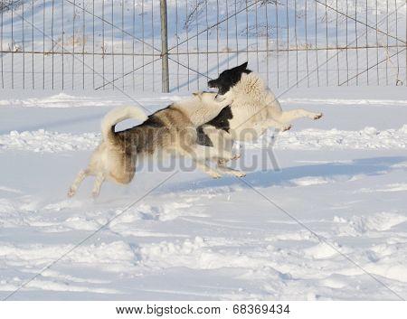 Ohotnichii dogs