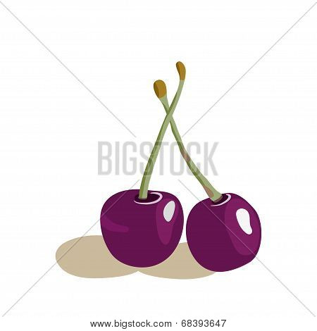 Vector illustration of appetizing cherries.