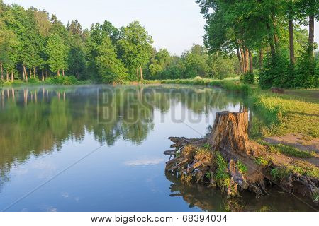 Stump On The Lake In The Forest At Dawn