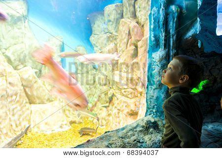Boy In Front Of A Huge Aquarium In Oceanarium
