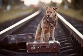 stock photo of tramp  - Dog on rails with suitcases - JPG