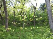 foto of starving  - Young and next generation of trees in spring at Starved Rock State Park - JPG