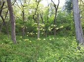 pic of starving  - Young and next generation of trees in spring at Starved Rock State Park - JPG