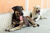 stock photo of stray dog  - Two stray dogs resting at street in Bangkok Thailand - JPG