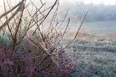 stock photo of cobweb  - Autumn cobweb covered with dew on the bushes in the fog - JPG