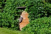 picture of creeper  - old wooden cellar door with green overgrown creepers on village - JPG
