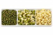 stock photo of mung beans  - Dried and soaked Mung Bean  - JPG