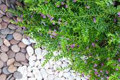 picture of fussy  - Decorative stones from the river into the gardens - JPG