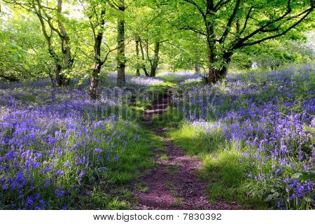 Blue Bells bosque