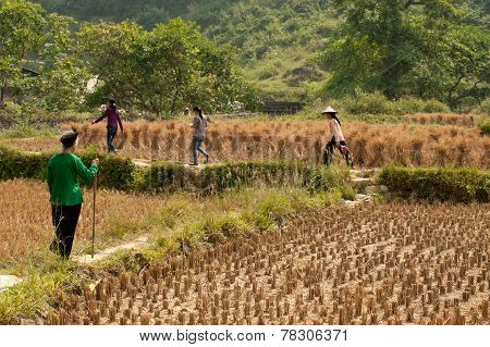 Farmer Walking In A Field.